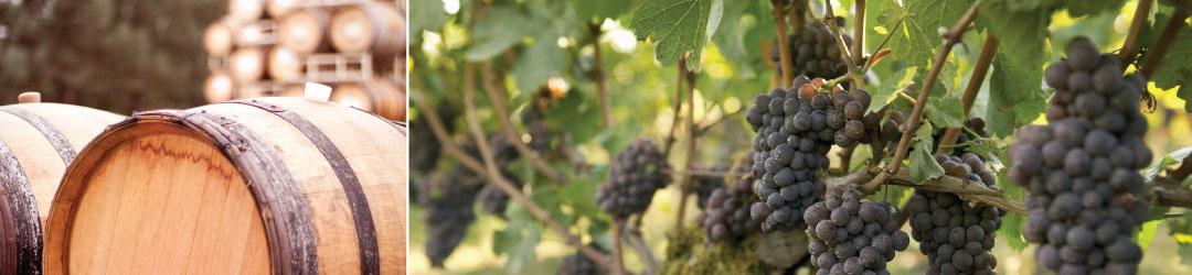 Custom crush winery